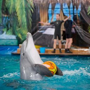 Дельфинарии, океанариумы Алтухово
