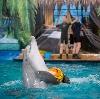 Дельфинарии, океанариумы в Алтухово