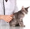 Ветеринарные клиники в Алтухово